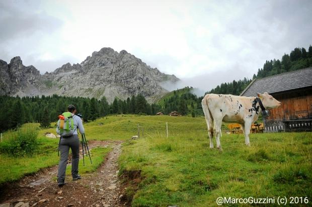 Foto: I pascoli verso Lagusel in Val San Nicolò